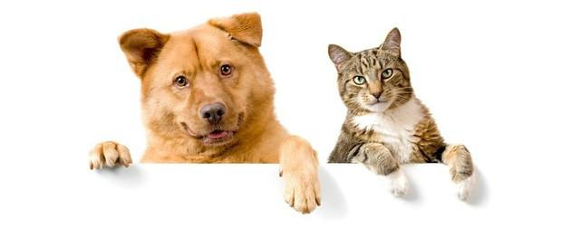 男不养猫,女不养狗