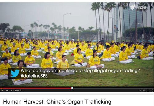 2015-4-8-minghui-organ-harvesting-headline